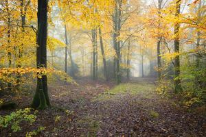 Broceliande Forest Fall by Philippe Manguin