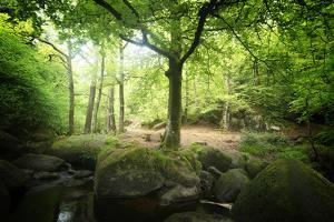 Huelgoat Forest Bretagne by Philippe Manguin