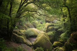 Huelgoat Forest In Brittany by Philippe Manguin
