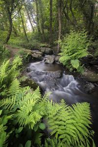 Le Ruisseau Du Pont Dom Jean by Philippe Manguin