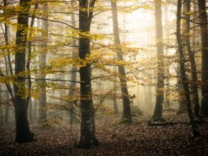 Yellow Forest by Philippe Manguin