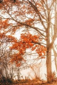 Autumn Emotion by Philippe Saint-Laudy