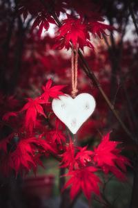 Heart in the Red by Philippe Saint-Laudy