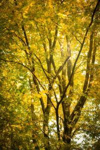 Light in the leaves by Philippe Saint-Laudy