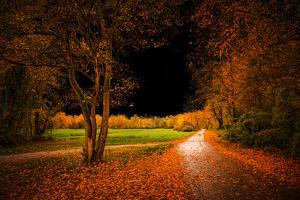 Orange Autumn by Philippe Saint-Laudy