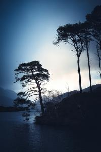 The Trees of Loch Eilt by Philippe Saint-Laudy