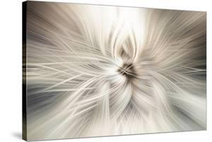 Trinity Collection 10 by Philippe Saint-Laudy
