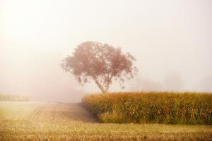A tree in the Mist by Philippe Sainte-Laudy