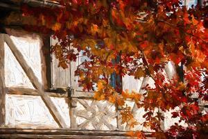 Autumn Alsatian by Philippe Sainte-Laudy