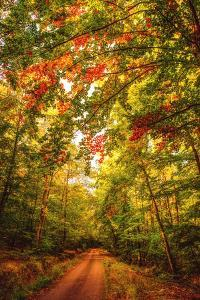 Autumn Colordul Path by Philippe Sainte-Laudy