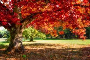 Autumn Dream by Philippe Sainte-Laudy