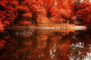 Autumn Happy Hour by Philippe Sainte-Laudy