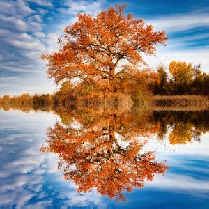 Autumn in the Reflection by Philippe Sainte-Laudy