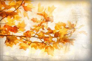 Autumn Rapture by Philippe Sainte-Laudy