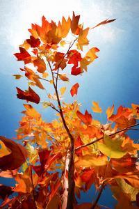 Autumn Serenade by Philippe Sainte-Laudy