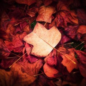 Autumn Trend by Philippe Sainte-Laudy