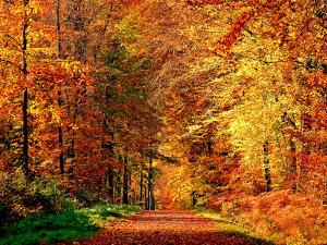Autumn Way by Philippe Sainte-Laudy