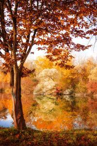 Autumnal Frame by Philippe Sainte-Laudy