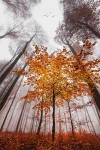 Autumnal tints by Philippe Sainte-Laudy