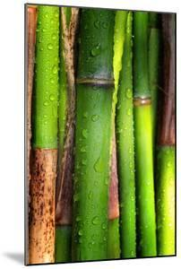 Bamboos Crying by Philippe Sainte-Laudy