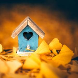 Bird House in Autumn by Philippe Sainte-Laudy