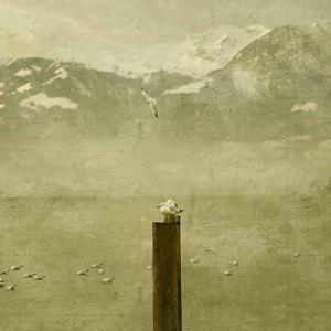 Birds by Philippe Sainte-Laudy