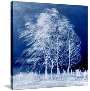 Blue Wind by Philippe Sainte-Laudy