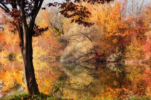 Catch a Leaf by Philippe Sainte-Laudy