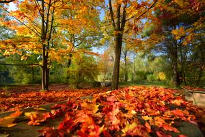 Colorful Autumn by Philippe Sainte-Laudy