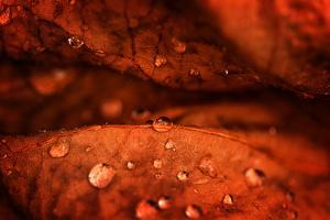 Drops Fall by Philippe Sainte-Laudy