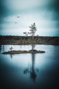 Duo Flight by Philippe Sainte-Laudy
