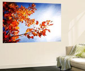 Fall Gifts by Philippe Sainte-Laudy