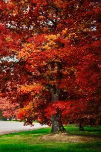 Fall Magic by Philippe Sainte-Laudy
