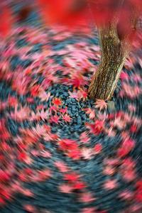 Fall Tourniquet by Philippe Sainte-Laudy