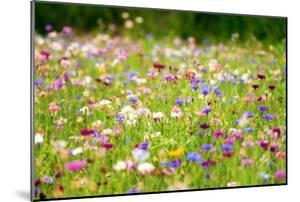 Field of Flowers in Paintography by Philippe Sainte-Laudy