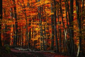 Forest Density by Philippe Sainte-Laudy