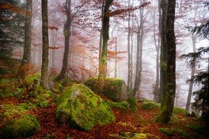 Forest Sanctuary by Philippe Sainte-Laudy