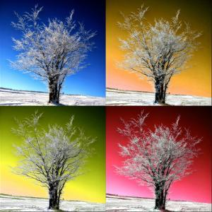 Four Seasons by Philippe Sainte-Laudy