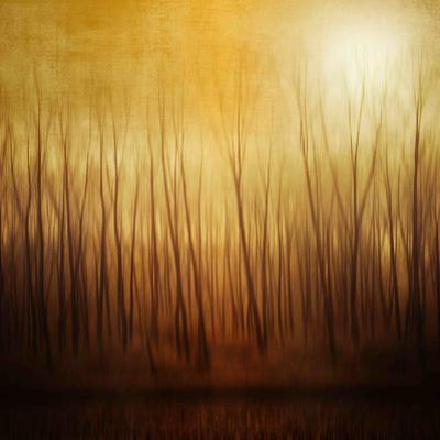 Ghost Forest by Philippe Sainte-Laudy