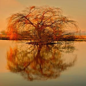 Golden Tree by Philippe Sainte-Laudy