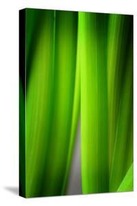 Green Leaf Curtains by Philippe Sainte-Laudy