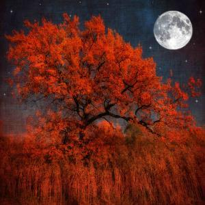 Halloween Color by Philippe Sainte-Laudy