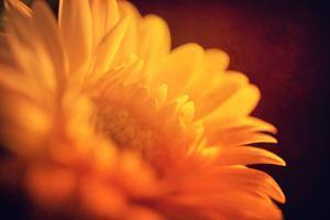 I Love the Sun by Philippe Sainte-Laudy