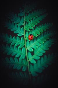Lady Bug by Philippe Sainte-Laudy