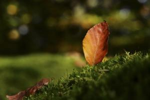 Leaf and Ant by Philippe Sainte-Laudy