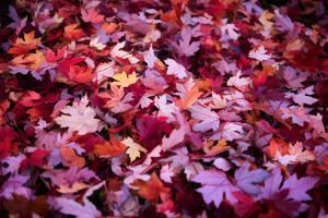 Leaves Carpet by Philippe Sainte-Laudy