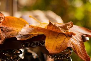 Leaves on Saddle by Philippe Sainte-Laudy