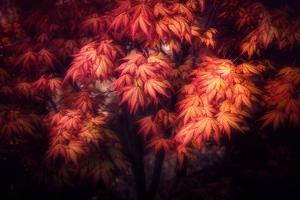 Maple Foliage by Philippe Sainte-Laudy