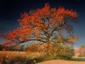 Melancholy Tree by Philippe Sainte-Laudy