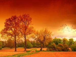 Orange World by Philippe Sainte-Laudy